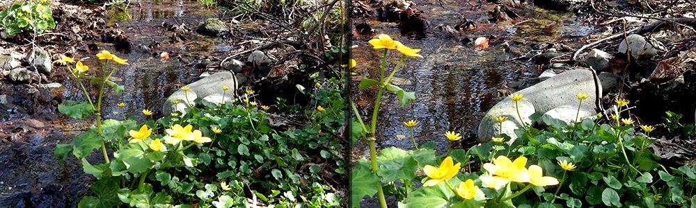 Jaro - květiny